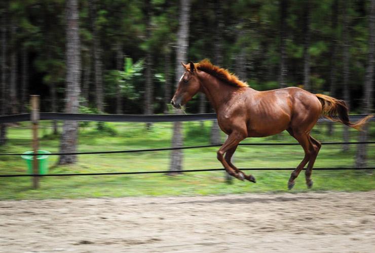 Equine Rescue and Adoption Foundation